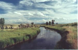 Albers Springcreek on Open A Ranch near Dillon, Montana.